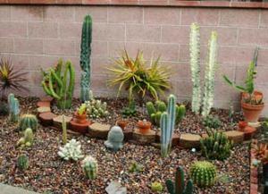 cactusinfo